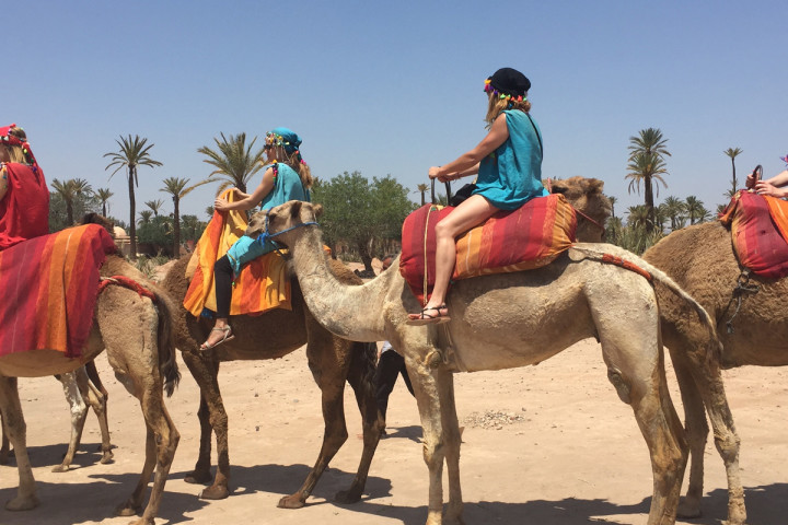 Marrakech  Balade au dos de dromadaire