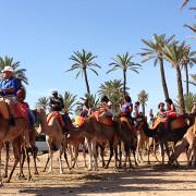 Marrakech  Balade au dos de dromadaire|depart pour une balade chameaux