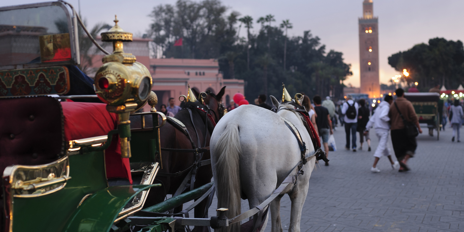 Marrakech : Botanical Visit and horse carriage ride | Maroc Excursion
