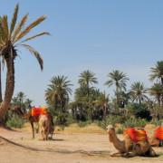 Marrakech  Visite Botanique|jardin des palmeraies