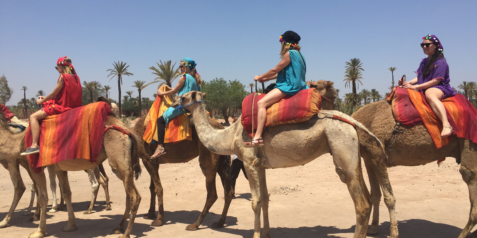 Marrakech : Camels ride in the palmeraie | Maroc Excursion